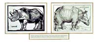 Rhinoceros [Silver print, woodcut, 75 1/2 x 32 in.] 1988
